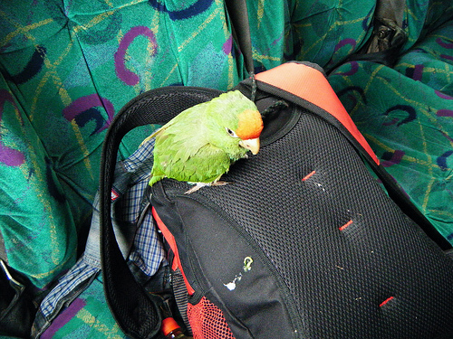 Parrot on a Bus by Claire Taylor