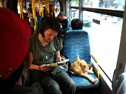 Cat on Bus by Andrew Bulhak